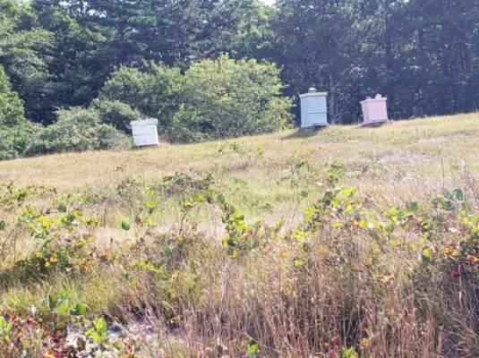 bee hives cranberry farm
